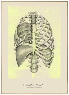 Anatomisk kunstplakat CLASSIC13T