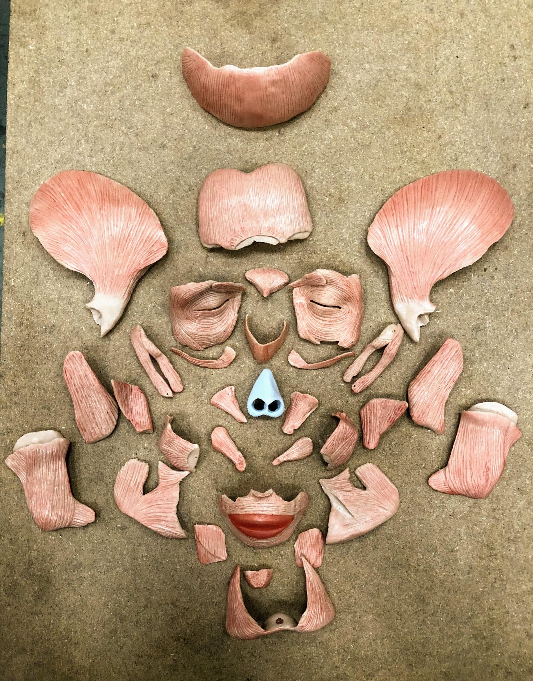 Voksenkranie med aftagelig ansigtsmuskulatur i 38 dele