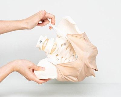 Praktisk model af bækkenbunden i stof målrettet demonstration af udvidelsen af vagina ved fødslen