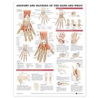 Plansch om handens & handledens anatomi & sjukdomar engelska