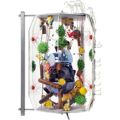 MENNESKECELLEN, 40.000 forstørrelse av menneskelig celle