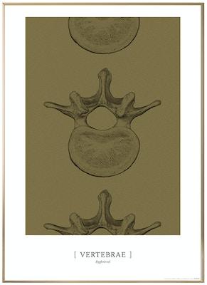Anatomisk kunstplakat CLASSIC23