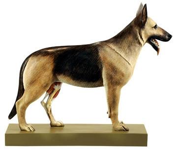 SOMSO Model af en fårehund