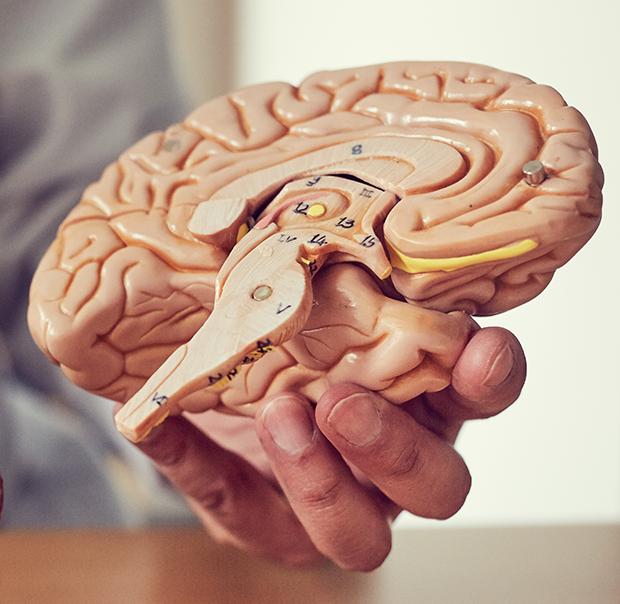 Hjernemodeller