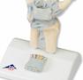 Håndmodel med ledbånd og karpaltunnelens indhold