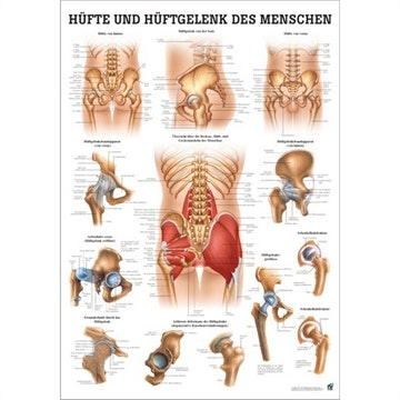 Lamineret plakat om hoften på tysk og latin (med sorte metal-lister)