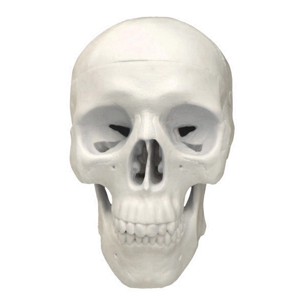 Miniature kraniemodel i tre dele