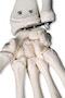 Ekstra robust skelet støbt i stærkt plastikmateriale