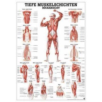 Dybe muskler dorsalt lamineret med sorte metallister tysk latin