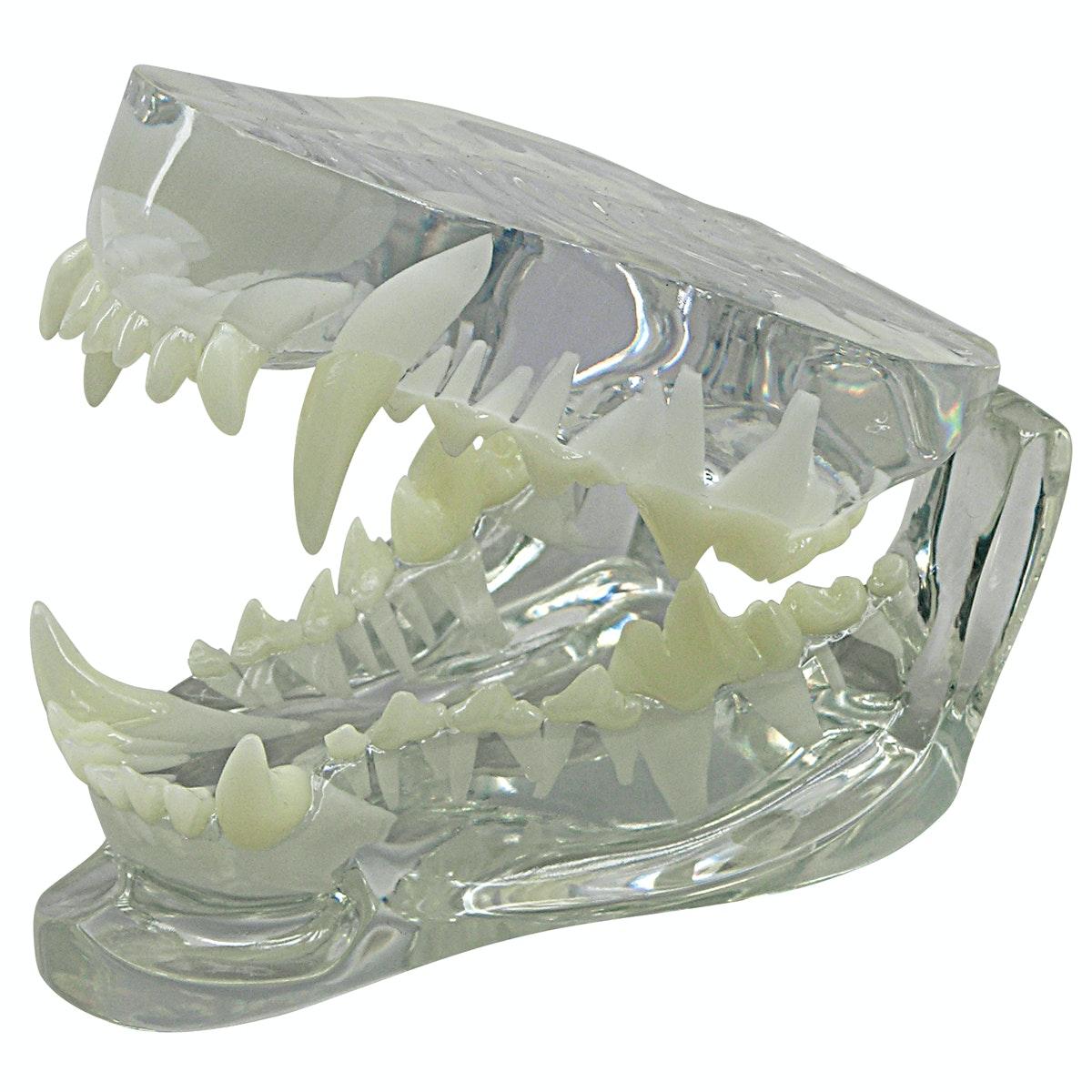 Gennemsigtig hundekæbe med tænder