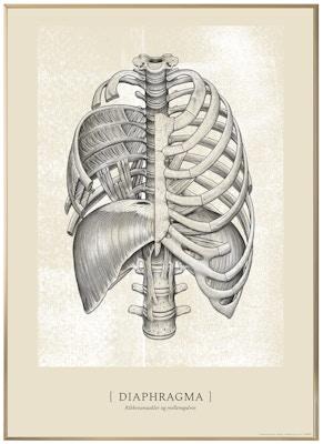 Anatomisk kunstplakat CLASSIC12