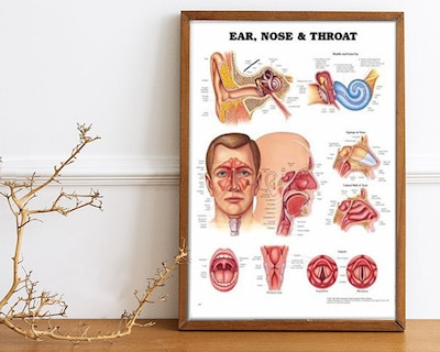 The sensory organs: Eyes, ear-nose-throat and skin