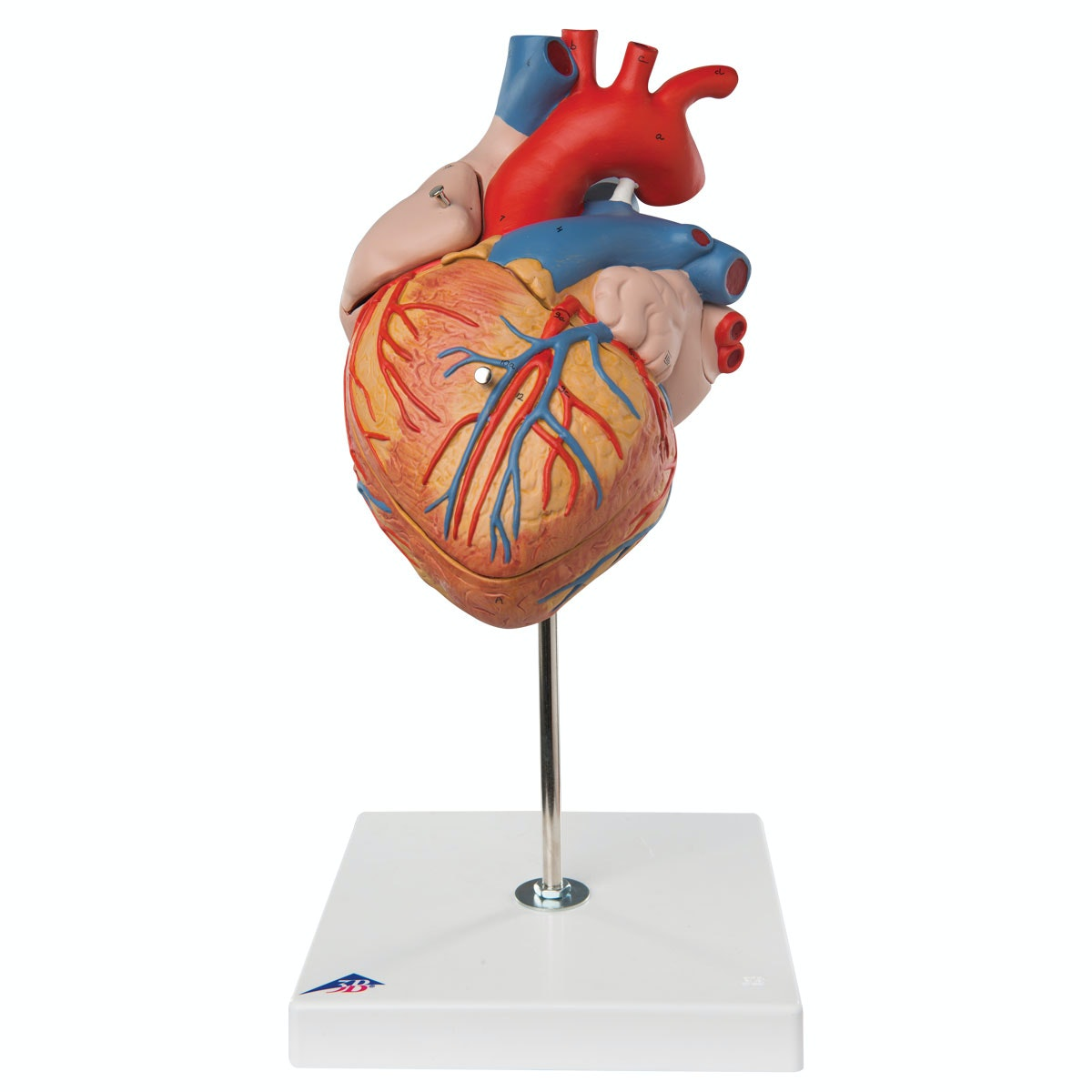 Hjerte 2 x normalstørrelse i 4 dele