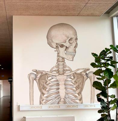 Skelet Mega Folie - Forfra