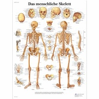 Skelettplansch latin (Das menschilche Skelett)
