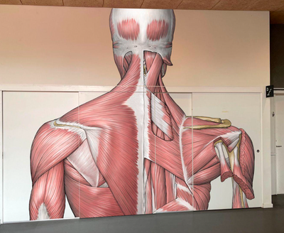 Muskelmand Skuldre - bagfra