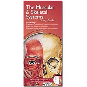 Skelet og muskulatur anatomisk folder