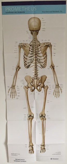 Stort plakatsæt med skelettet og muskler