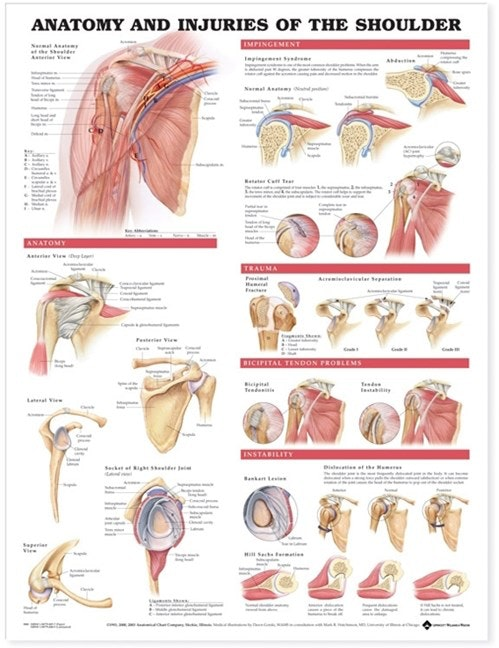 Skulderplakat Anatomi & skader lamineret engelsk (Anatomy & injuries of the shoulder)