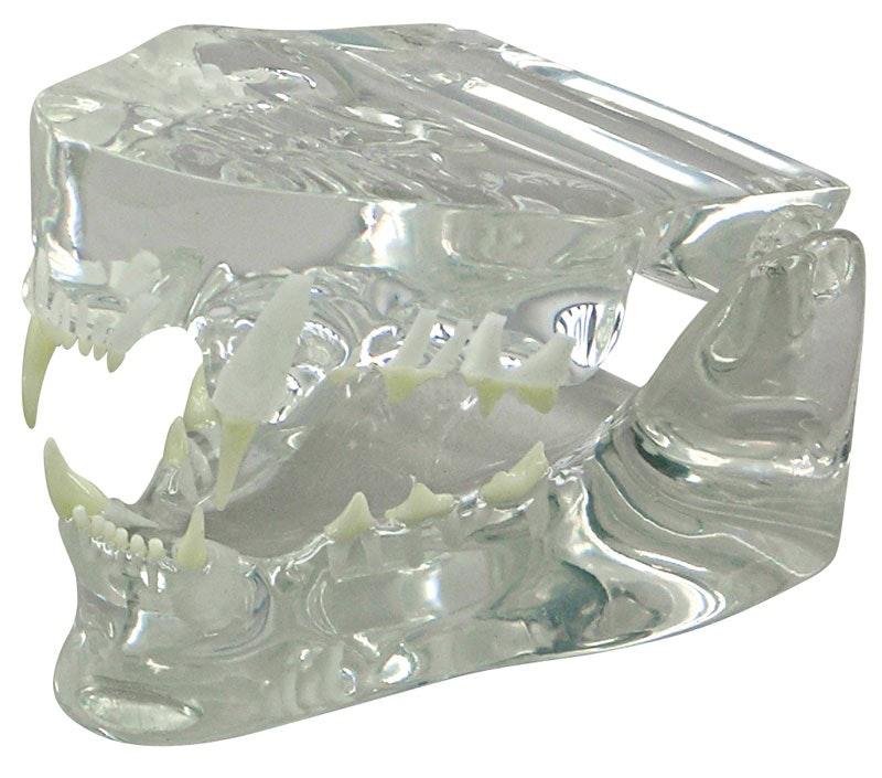 Kattkäke med tänder i klar plast