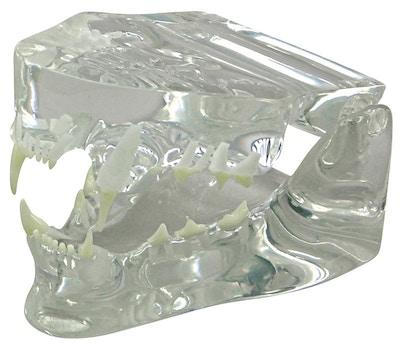 Kattekæbe i klar plastik
