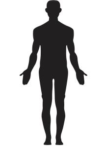 Anatomiske modeller.png?ixlib=rb 1.1