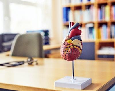 Hjertemodeller & karsystemet