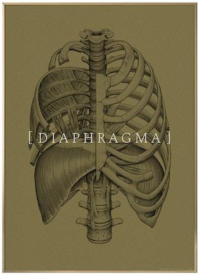 Anatomisk kunstplakat CLASSIC10T