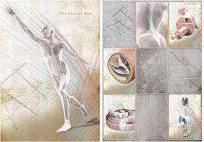 Fascia plakatsæt 60x85 cm engelsk tekst