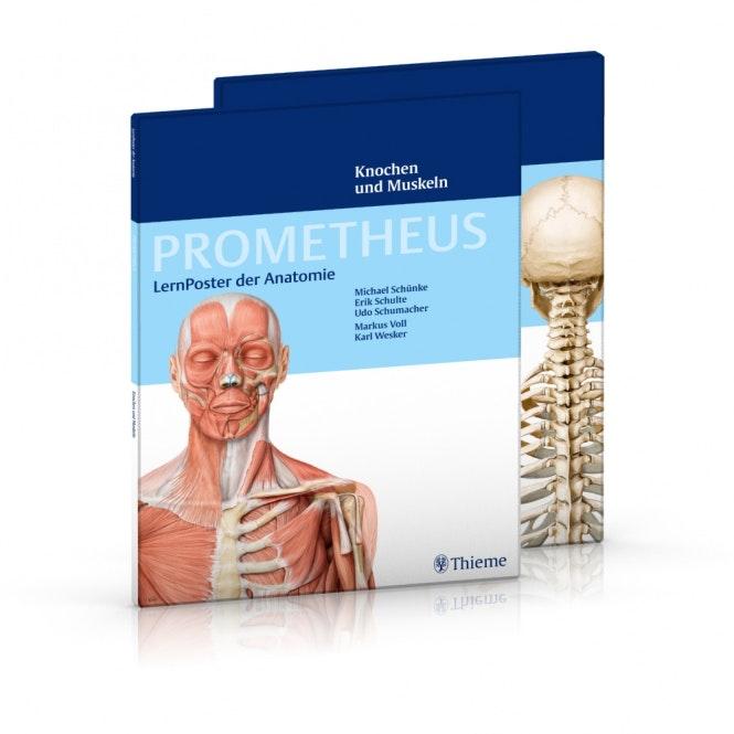 Muskel- og Skeletplakat plakatsæt
