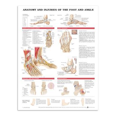 Anatomi & skader i fot & ankelledd (plakat på engelsk)