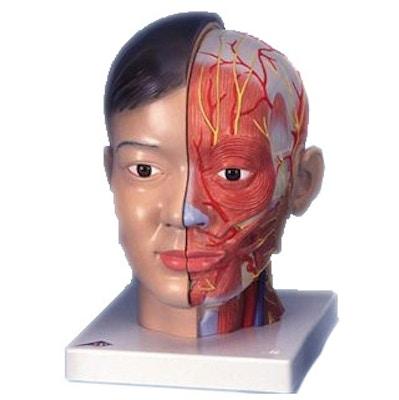 Asiatisk luksus hoved med nakke, 4 dele