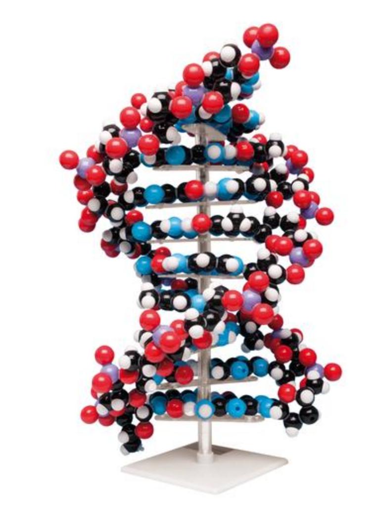 Stor model af DNA som samlesæt opbygget af pædagogisk farvet atomer