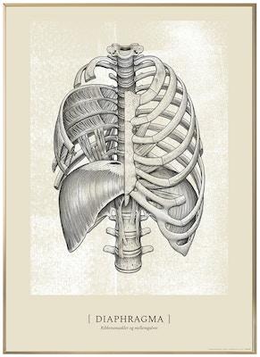 Anatomisk kunstplakat CLASSIC12T