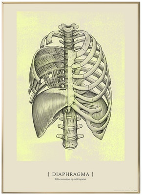 Anatomisk kunstplakat CLASSIC13