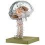 Hjernemodel i højeste kvalitet og med fokus på hjernens indre strukturer. Kan adskilles i 15 dele
