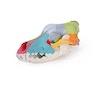 Model af hunde kranie, didaktisk farvet
