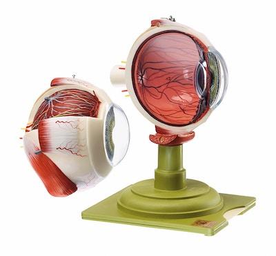 SOMSO Øjeæble model, 2 dele