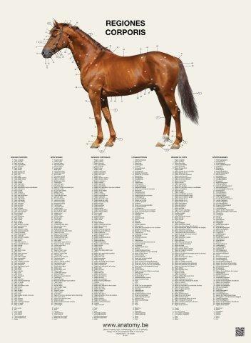 6 hesteplakater i flipover