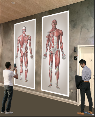 Muskelmand Mega Print - Forfra og bagfra