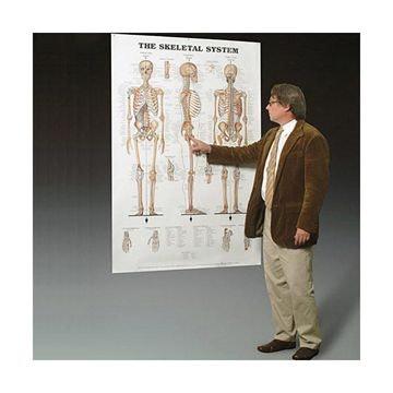 Skeletplakat gigantstørrelse engelsk