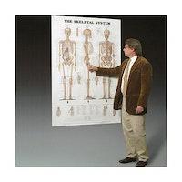 Skeletplakat i kæmpestørrelse på engelsk