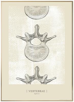 Anatomisk kunstplakat CLASSIC24T