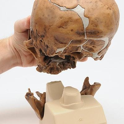 antropologisk kranie - La Chapelle-aux-Saints