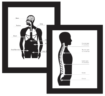 Anatomiske plakater.png?ixlib=rb 1.1