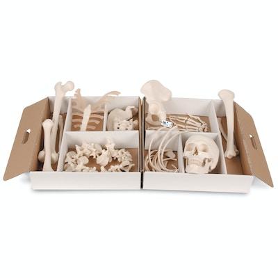 Klassisk knoglesæt til mange formål. Leveres i en ruminddelt papkasse med håndtag