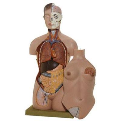SOMSO Kvindelig torso med hoved