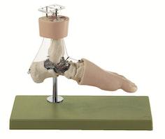 Avanceret fodmodel målrettet bevægelsesmønstre