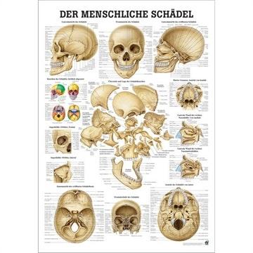 Kranieplakat lamineret med sorte metallister tysk latin