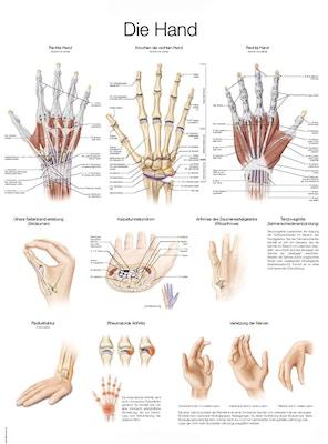 Plakat om hånden på tysk og engelsk